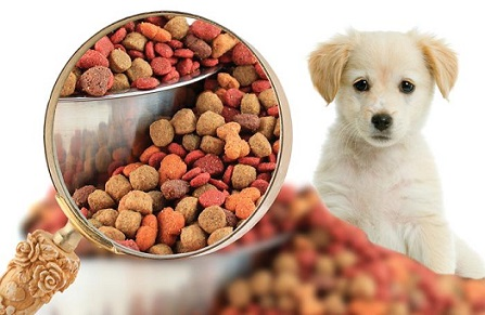 US Online Pet Food and Supplies Market 2019 Current Trends