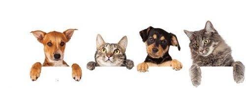 Pet Care Market Size, Trends, Growth, Share, Industry Analysis